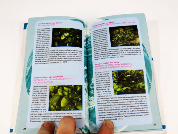 Образует крупные листья округлой формы сочного ярко-зеленого цвета, располагающиеся под самой поверхностью воды